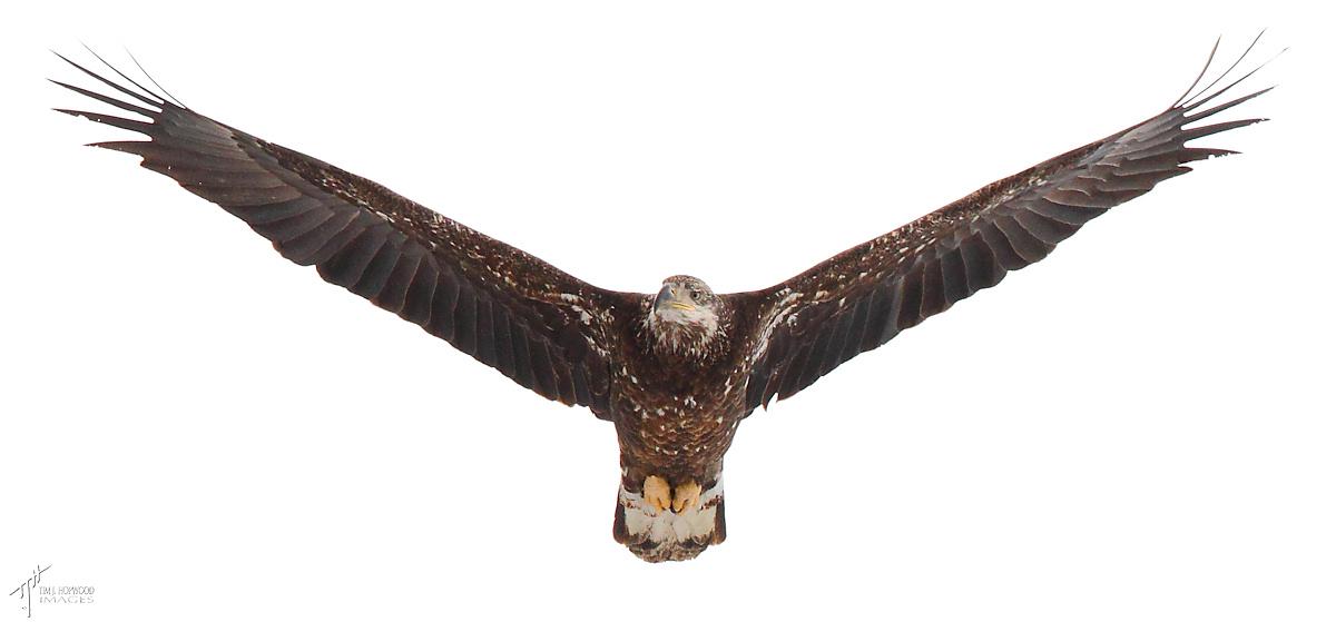 aB_Eagle1