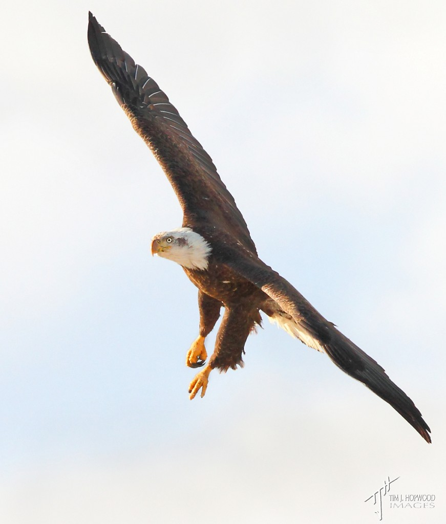 sB_Eagle1