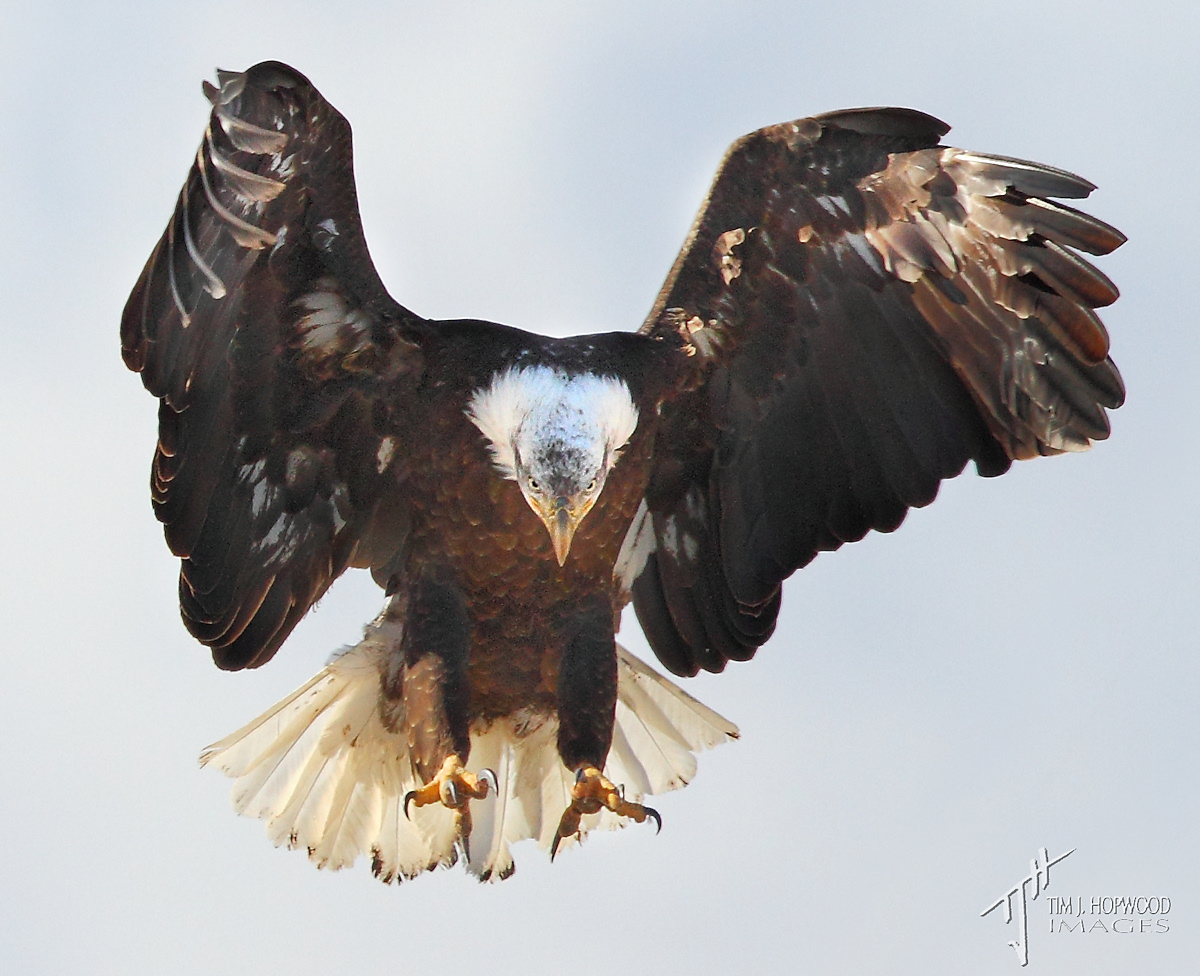 sB_Eagle3