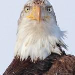 sB_Eagle5