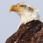 sB_Eagle6