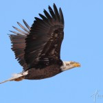 sB_Eagle7